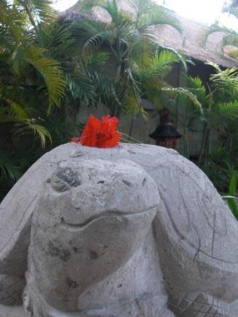 亀の上に花