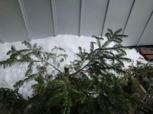 雪つもった